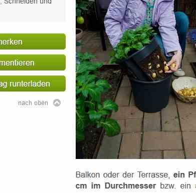 Das Bild zeigt eingepflanzte Kartoffel. Für einen Shop ist die Dateigröße zu groß